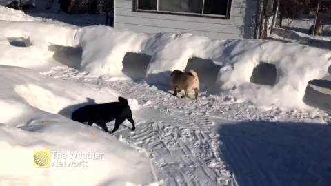 DOGS GET THEIR VERY OWN SNOW KINGDOM TO PLAY IN