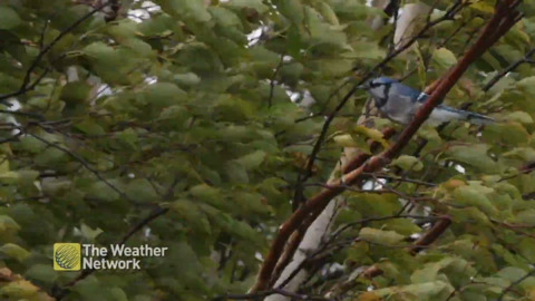 THIS BLUE JAY RIDING OUT TEDDY WHILE CLINGING TO A TREE IS SO VERY 2020