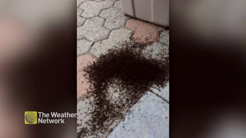 GROSS: THAT'S A WHOLE LOT OF ANTS TAKING OVER ONTARIO MAN'S PATIO