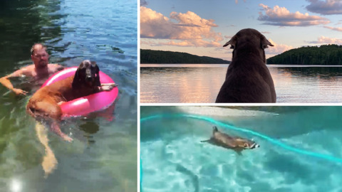 THESE ANIMALS SURE KNOW HOW TO BEAT THE SUMMER HEAT!
