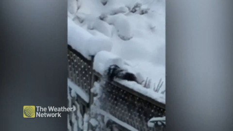 'SQUIRREL-PLOW' GOES TO WORK ON A SNOWY FENCE LINE