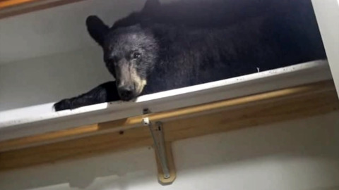BEAR BREAKS IN HOME, TAKES A NAP, REFUSES TO LEAVE