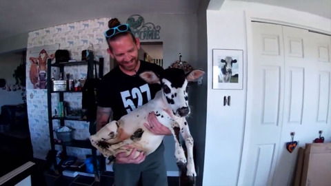 SPECIAL DAD RESCUES AND ADOPTS 'BROKEN' CALF, THIS IS WHAT FATHER'S DAY IS ALL ABOUT