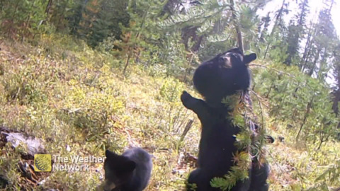 THAT'S THE SPOT! PERFECT BACK-SCRATCHER DISCOVERED BY BEAR FAMILY