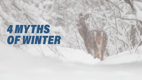 WINTER IS COMING: FOUR MYTHS USED TO PREDICT THE SEASON AHEAD
