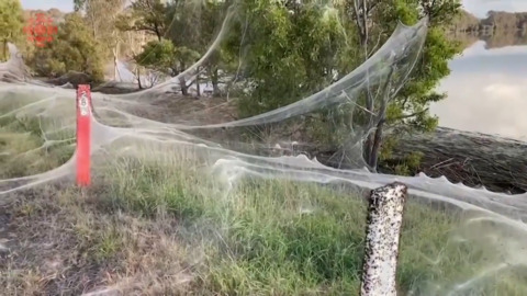 CREEPY, SILKY SPIDER WEB FORMS A HUGE BLANKET OVER THE LAND