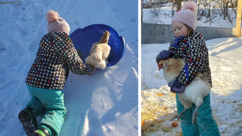 SASKATCHEWAN GIRL TAKES SLED RIDE WITH PET HEN