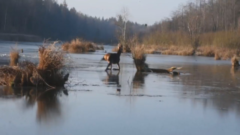 RESCUE TEAM SAVES DEER SEEN SLIPPING AND SLIDING ON FROZEN LAKE