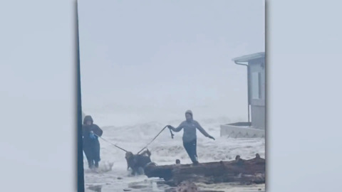 WOMEN AND DOGS NARROWLY ESCAPE KING TIDE
