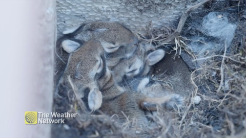 BABY BUNNY CAM CAPTURES NAPTIME CUDDLE PUDDLE