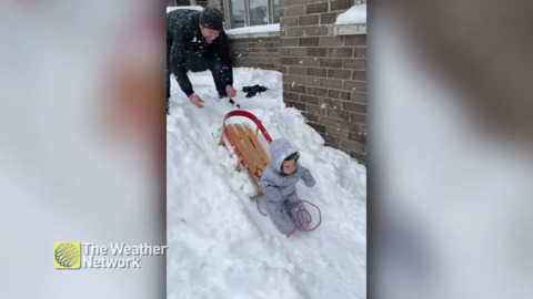 YOUNG SLEDDER TAKES A TUMBLE IN TOBOGGANING ATTEMPT