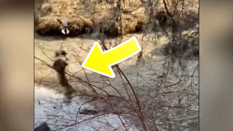 LYNX CAPTURED ON VIDEO MAKING A MAJOR LEAP FOR A DUCK