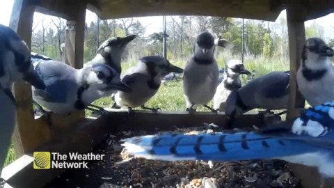 IT'S A PARTY AND ALL THE BLUE JAYS ARE INVITED