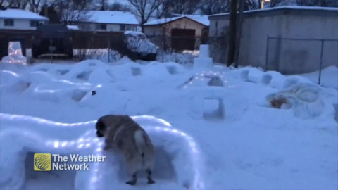 PAIR OF PUPS GET PUG-SIZED SNOW TUNNELS THAT LIGHT UP