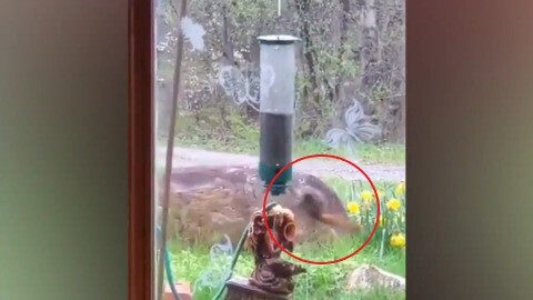 SQUIRREL HANGS TIGHT ON WILDLY SPINNING BIRDFEEDER