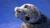 The RIGHT way to handle 'orphaned' seal pups spotted in B.C.