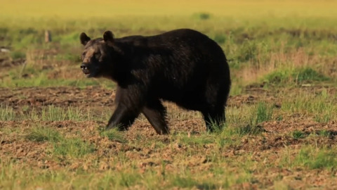 FALL IS THE MOST IMPORTANT SEASON TO BE BEAR AWARE