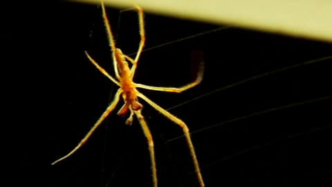 BE AWARE: HURRICANES MAKE SPIDERS MORE AGGRESSIVE, REPORT SAYS