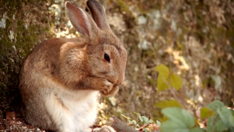 BUNNY ABANDONMENT: WHY EASTER IS TRULY THE SCARIEST TIME TO BE A PET BUNNY