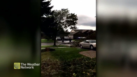 FAMILY SHOCKED AS MICROBURST SPLITS TREE IN FRONT YARD OF KINGSTON HOME