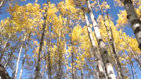TAKE A MOMENT TO BE AMAZED AS TREES TURN GOLD IN THE ROCKIES