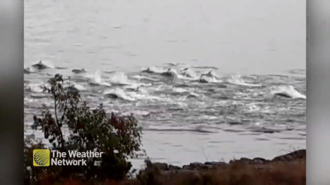 HUGE DOLPHIN POD PUTS ON A SHOW RIGHT NEXT TO SHORE