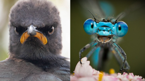 THIS HILARIOUS PHOTO CONTEST WILL PUT A SMILE ON YOUR FACE