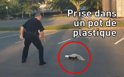 UNE MOUFETTE REMERCIE UN POLICIER EN L'ARROSANT