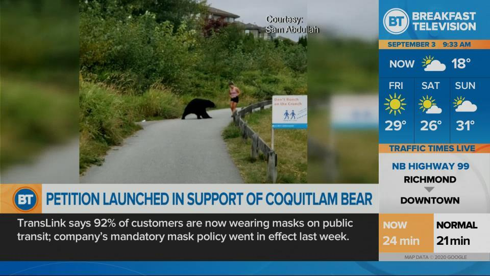 Calls grow to save bear that swiped at jogger on Coquitlam Crunch
