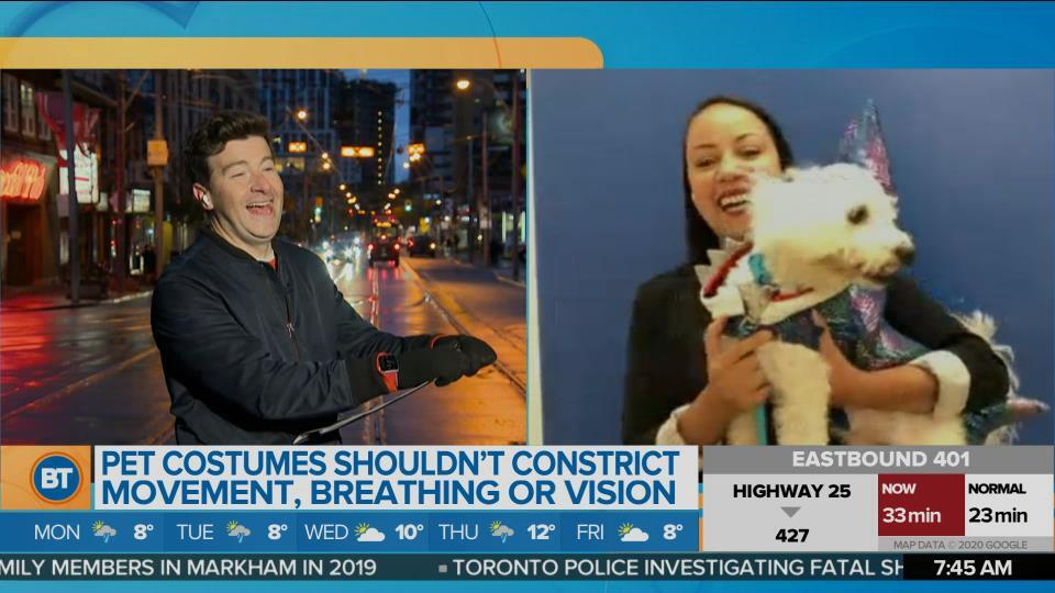 Safe Halloween costume ideas for your pets with the SPCA