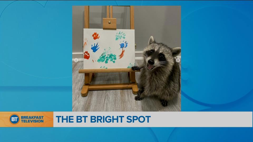 BT Bright Spot: Raccoon artists