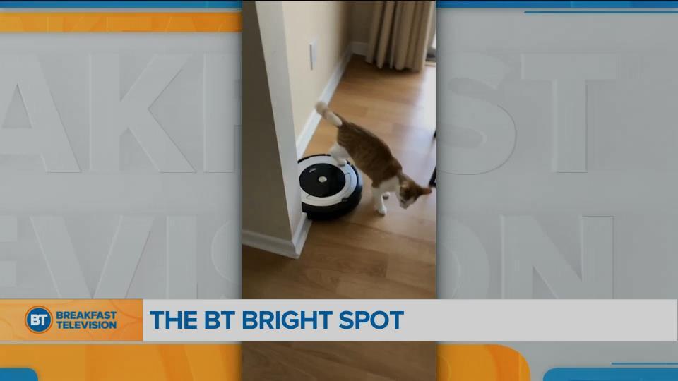 BT Bright Spot: Cat Chills on a Roomba