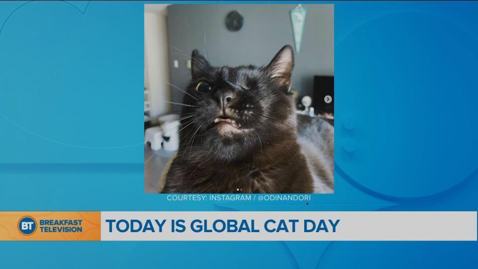 BT Bright Spot: It's Global Cat Day!