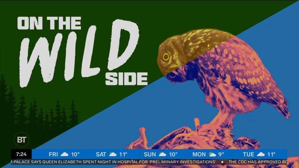 Welcome to our first edition of 'On the Wild Side'
