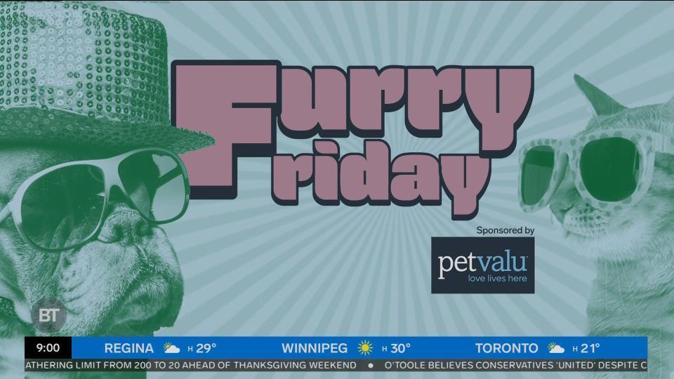 Introducing Furry Fridays with Pet Valu!