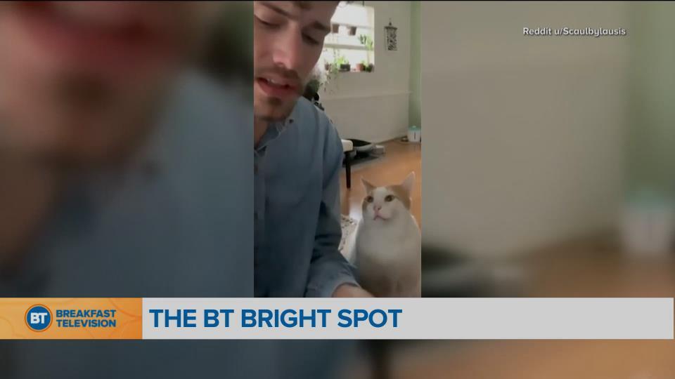 BT Bright Spot: A Sweet Serenade Between a Man and His Cat