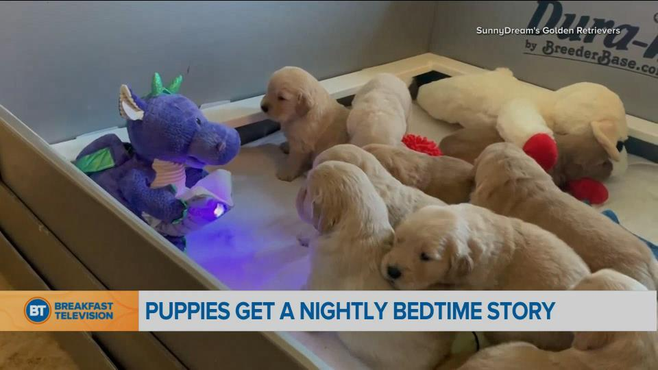 BT Bright Spot: puppies being read a bedtime story