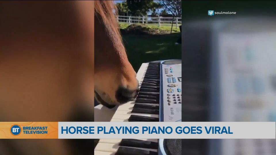 BT Bright Spot: Horse playing piano with his nose