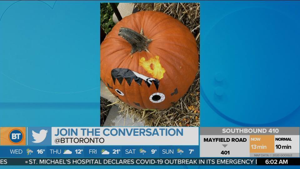 The pumpkin-biting culprits!