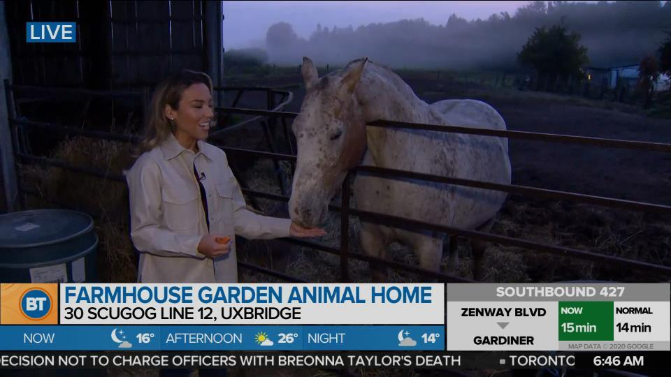 Nicole is LIVE at Farmhouse Garden Animal Home (1 of 4)