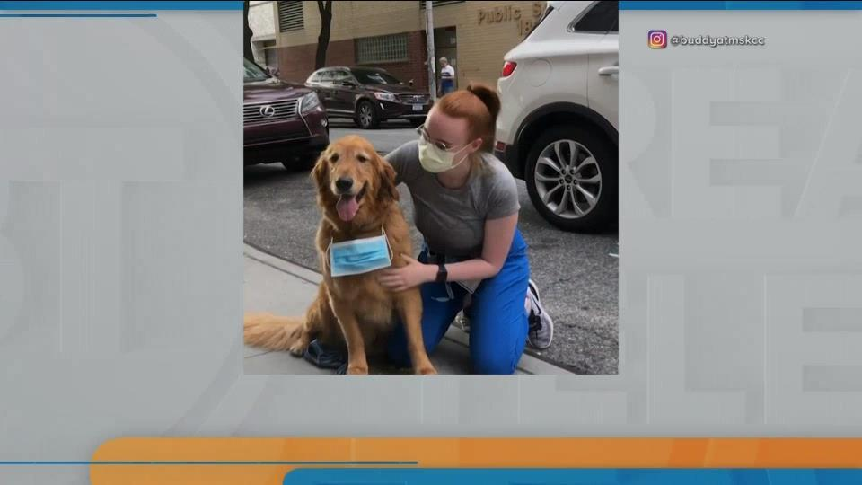 BT Bright Spot: Buddy the therapy dog
