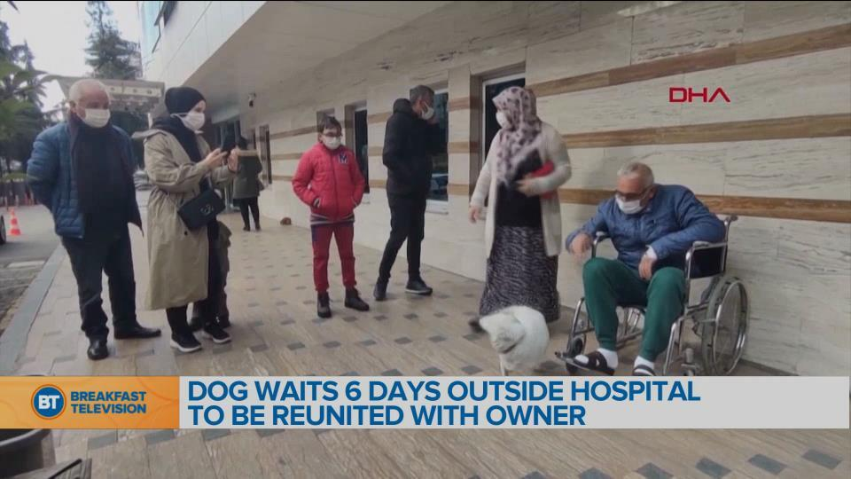 BT Bright Spot: Dog Waits 6 Days Outside Hospital to Be Reunited With Its Owner