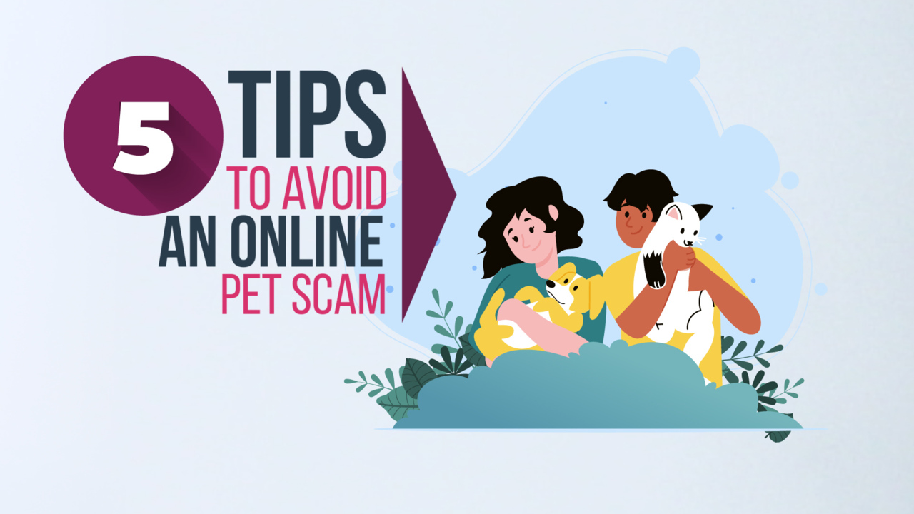 Avoid Pet Scams And Safely Purchase Animals Online