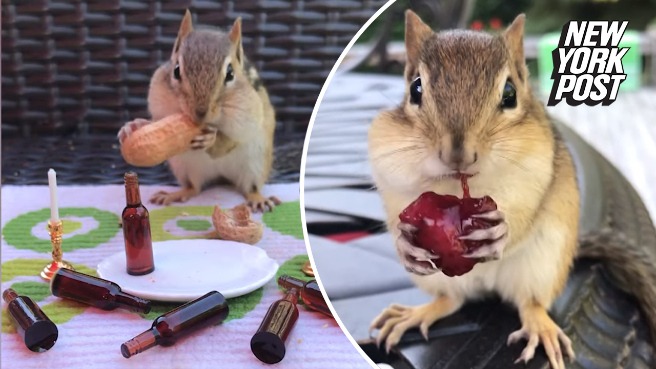 These chipmunks are nuts for nuzzles