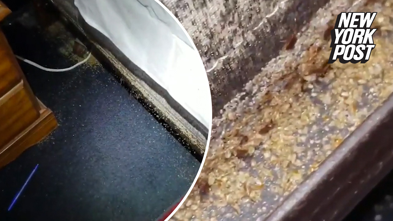 This army of bed bugs will make your skin crawl