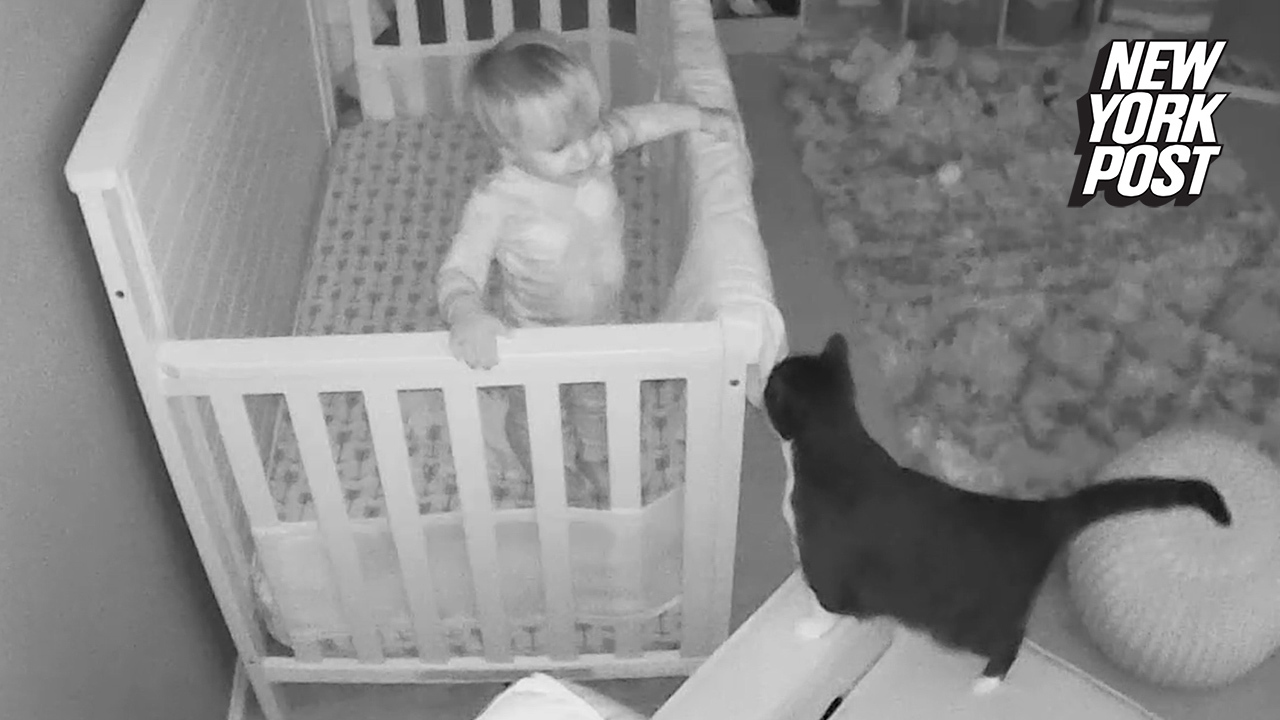 Cat conversation with 18-month-old caught by baby monitor