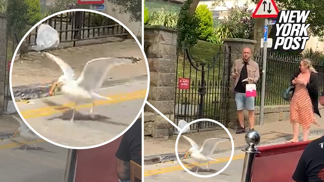 Hilarious play-by-play as seagull swipes sandwich out of man's hand
