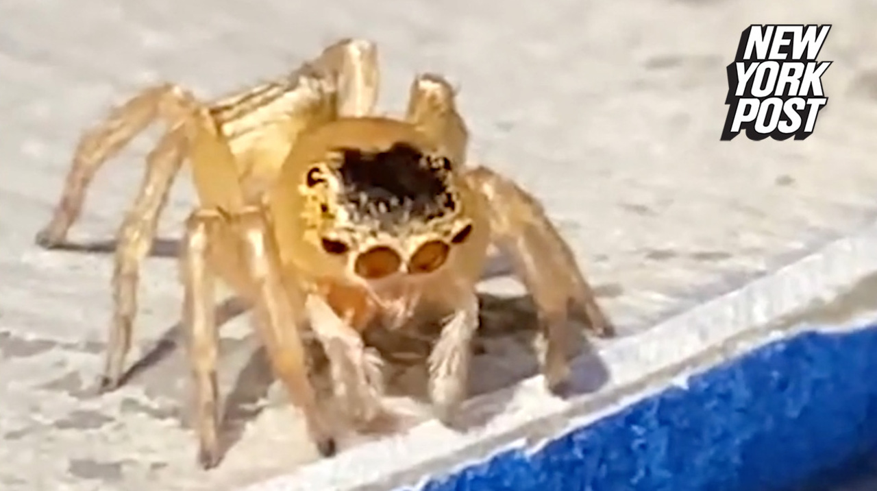 Spider looks like Elton John wearing glasses and a toupée