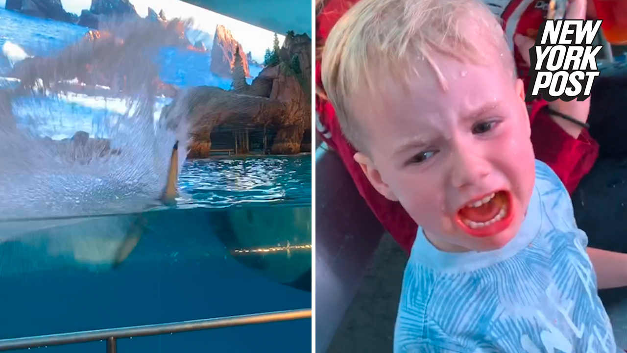 Killer whale soaks unhappy tot in this cute video