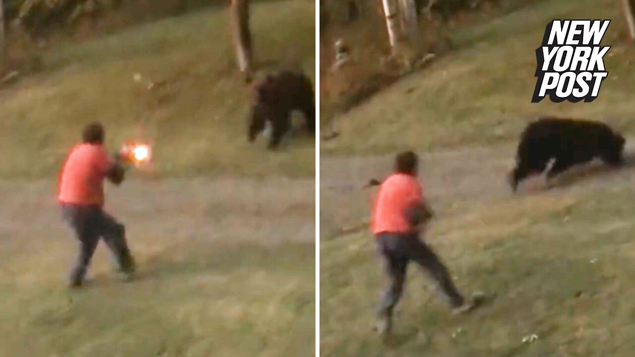 Grizzly bear takes shotgun blast at point-blank range and keeps charging
